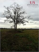 Photo: Tree near farm pond (1-10-12)