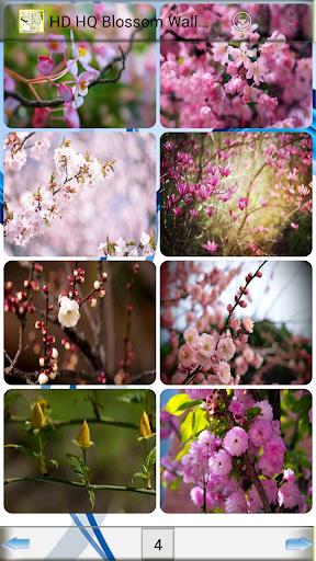 HD 고화질 꽃 배경 화면