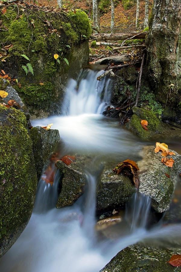 by Siniša Almaši - Nature Up Close Water ( water, up close, natural light, stream, leaves, landscape, woods, dslr, colours, nature, autumn, cascade, view, stones, rocks, light, river )