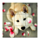 Dogs Puzzle