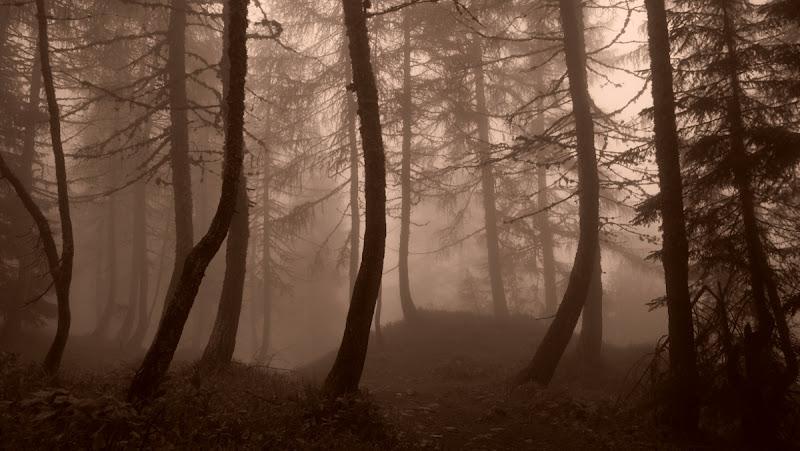 tre fratelli nella nebbia di Turiddu