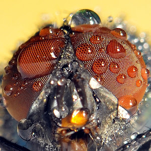 Wet fly close up.jpg