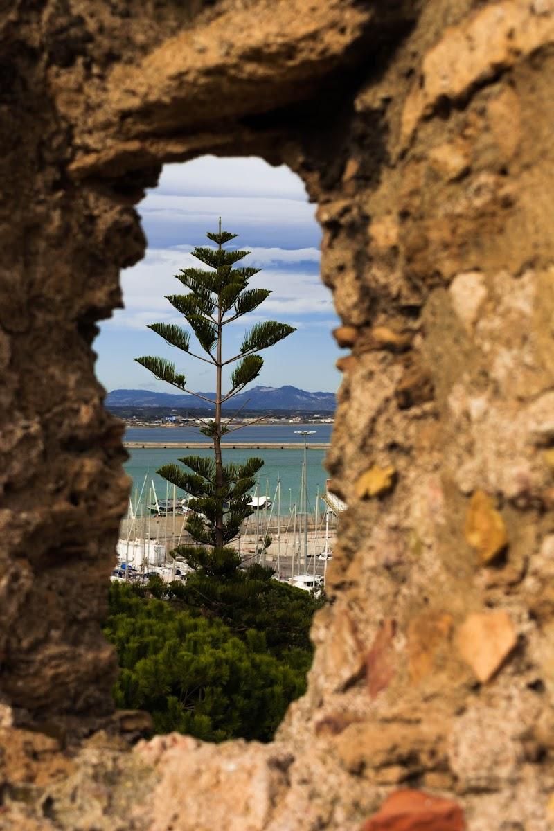 L'albero fra le mura di pixi111