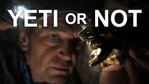 Yeti or Not thumbnail