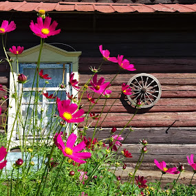 Summer day by Natalie Ax - Buildings & Architecture Homes ( country, flowers, old, countryside, hut, rural, retro, cabin, wooden house, house, summer, sunlight, outdoors, daylight, wooden, vacation, wood, antique, front, purple flowers, village, sunny )