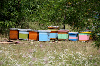 Photo: Day 82 - Beehives on the Side of the Road