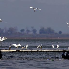 by Audy Sand - Animals Birds