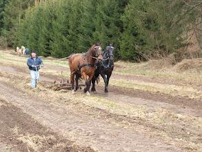 Photo: Godt med en erfaren hest ved siden!