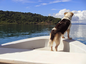 Photo: Dog looking for dolphins. Or fish. Or anything to bark at.
