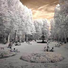 In Da Park... by Zvonimir Cuvalo - Landscapes Prairies, Meadows & Fields