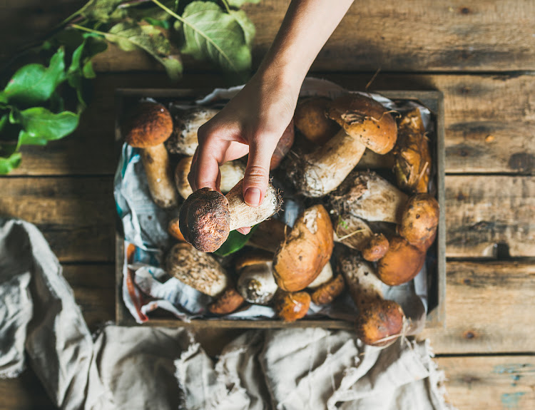 Porcini might be one of the most coveted edible mushrooms.