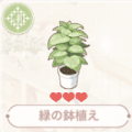緑の鉢植え