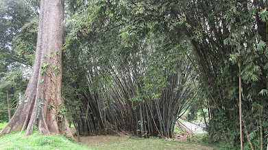Photo: Botanical Gardens - Peradeniya