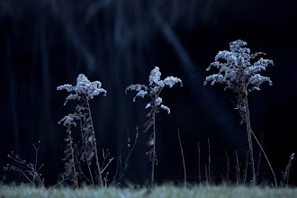Photo: Defiance Still standing after rain, sleet, snow and frost.  #365Project curated by +Simon Kitcher