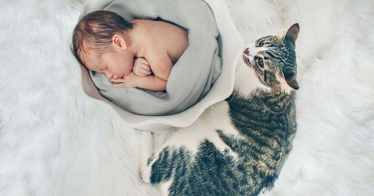 lavez-vous les mains après avoir caressé votre chat pour limiter la transmission des allergènes