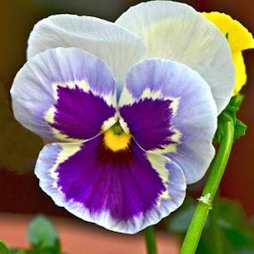 by Nitin Puranik - Nature Up Close Flowers - 2011-2013