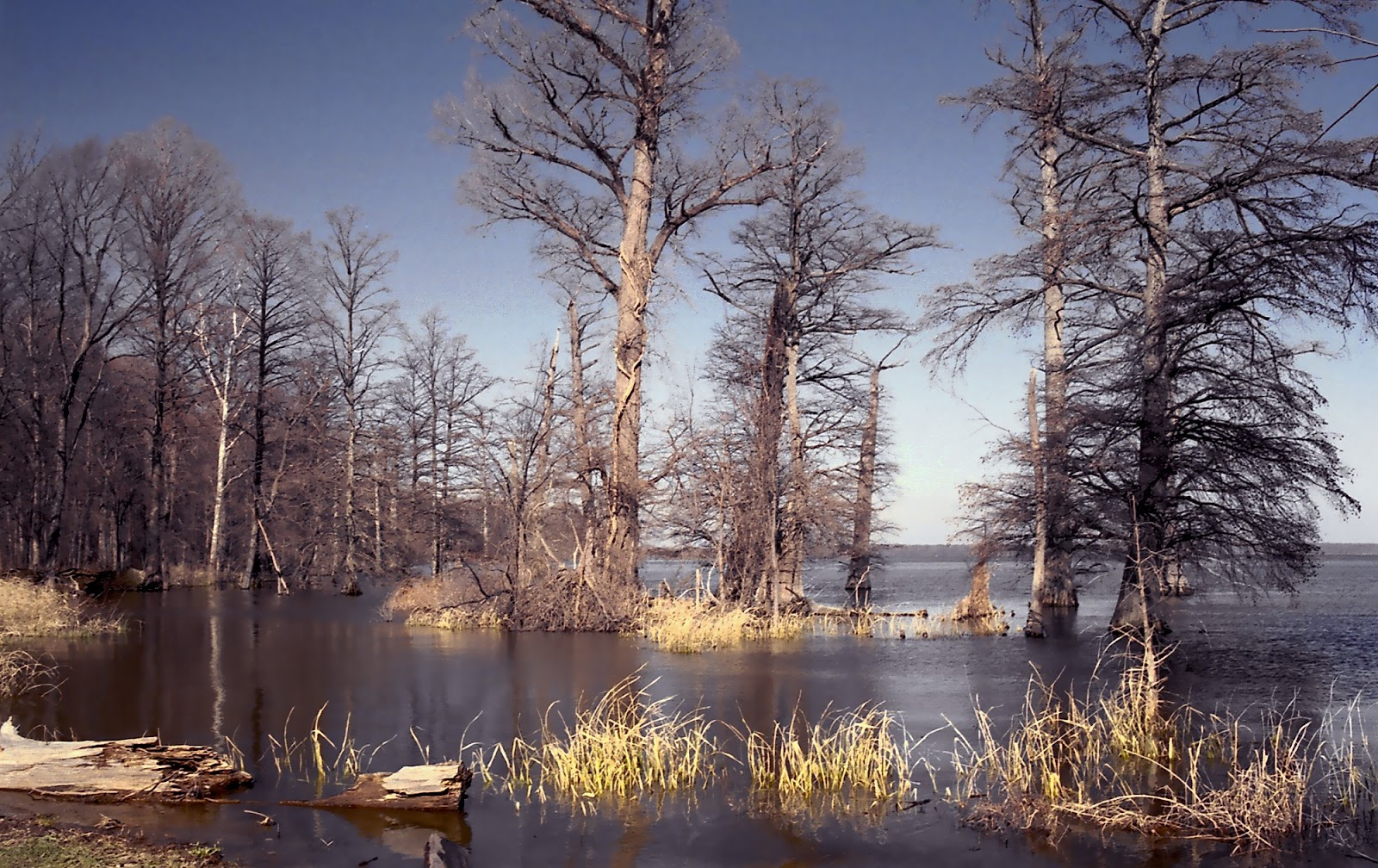 Reelfoot_Lake.jpg
