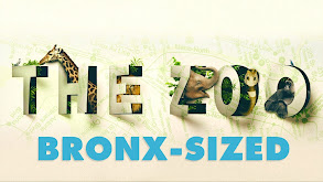 The Zoo: Bronx-Sized thumbnail