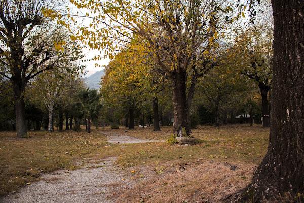 Foglie gialle e profumo d'autunno  di NichiB