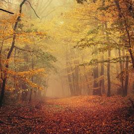 Autumn Walk LXVI. by Zsolt Zsigmond - Landscapes Forests ( season, tree, nature, autumn, forest, leaf )