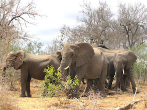 Photo: Mkhaya GR - elephants
