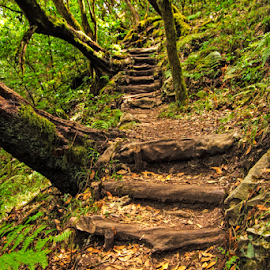 stairway in the forest 2 by Jose Luis Mendez Fernandez - Nature Up Close Trees & Bushes ( stairs, stairway, trees, forest, steps,  )