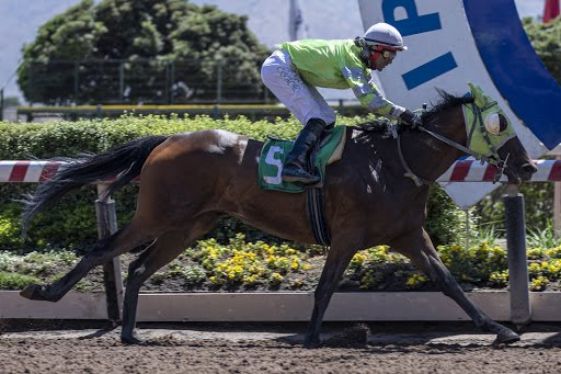 Great Power (Auguri) se impuso en Handicap (1000m-Arena-HCH). - Staff ElTurf.com