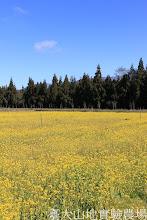 Photo: 拍攝地點: 梅峰-壹平台 拍攝植物:油菜花 拍攝日期:2013_02_15_FY