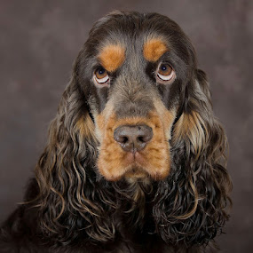those eyes by Anja Voorn - Animals - Dogs Portraits