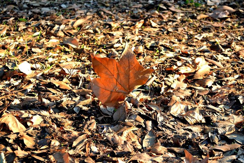 La caduta delle foglie.. di vivancove84