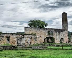 Photo: Papaya plantation ruins in Jamaica.