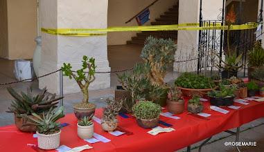 Photo: Gasteria, Crassula, Haworthia, Aloe