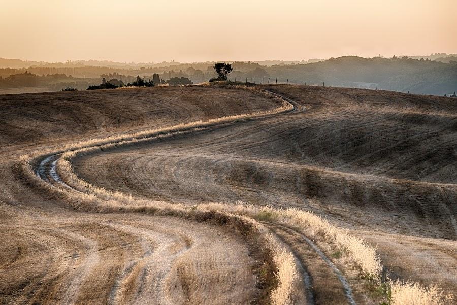 Harvest by Giovanni  Volpe  - Landscapes Prairies, Meadows & Fields ( field, countryside, farm, tuscany, county fair, harvest, siena, italy, farming, fields, country, , #GARYFONGDRAMATICLIGHT, #WTFBOBDAVIS )