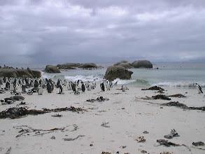 Photo: Pingviinit Boulderin rannalla