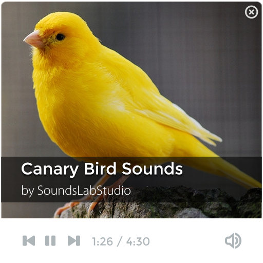 Canary bird song free download