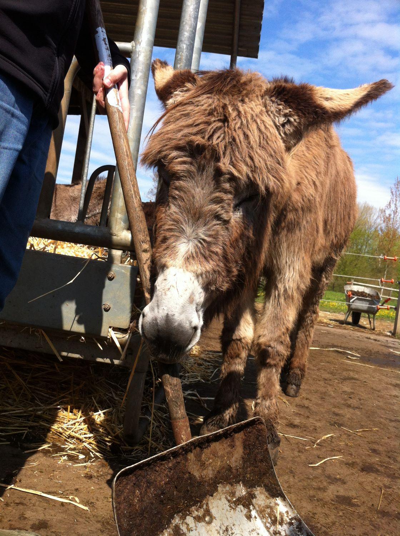 Workshop voor Hoogsensitieve Jongeren (10+): Zorgen voor een ezel is zorgen voor jezelf