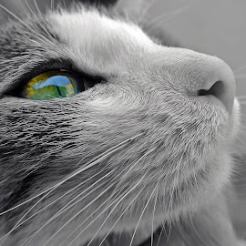 by Pedrosa Dani - Animals - Cats Portraits (  )