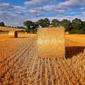 Harvest time II by Ciprian Apetrei - Landscapes Prairies, Meadows & Fields ( field, brittany, harvest, landscape, prairie,  )