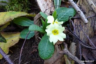 Photo: ... s trobenticani skupaj pomlad so klicali, ....