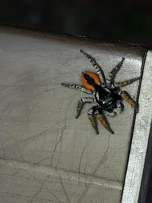 Paura dei ragni?? di Sonia97