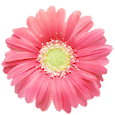PG Flowers - Sticker Pack from Photo Grid apk