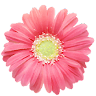 PG Flowers - Flower Sticker Pack from Photo Grid icon