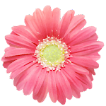 PG Flowers - Sticker Pack from Photo Grid Icon
