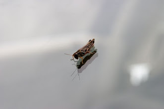 Photo: Grass Hopper Looking at Reflection
