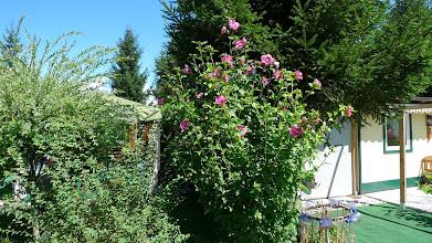 Photo: 17.8.2014: Endlich wieder Sonnenschein und wie man sieht wachsen meine Pflanzen wie verrückt...