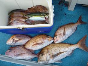 Photo: イワオさん!ぶっちぎりの釣果!真鯛10匹! 半分は良型!今日の変な潮でお見事でした!