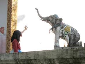 Photo: Did I mention Vanessa likes elephants?