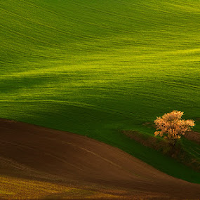 Escaping light by Jozef Micic - Landscapes Prairies, Meadows & Fields ( field, tree, rolling, green, waves, brown, spring )