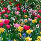 Tải Game Những bông hoa mùa xuân