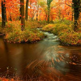 Autumn by Richard ten Brinke - Landscapes Forests (  )
